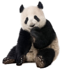How to survive Google Panda Update with SEO of content